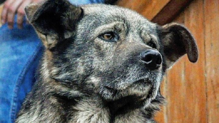 «Я общий, меня все любят». Пёс Гриша из Кудымкара обратился к губернатору в Instagram