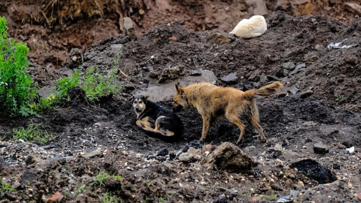 В Перми на пенсионера напала бродячая собака