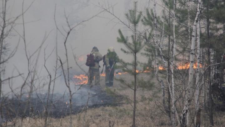 В Курганской области сотни добровольцев вместе с МЧС сражались с майскими пожарами