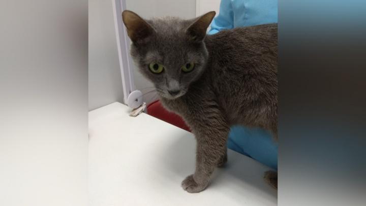 В Перми кошке Маркизе, которую от морозов спасла собака, нашли новых хозяев