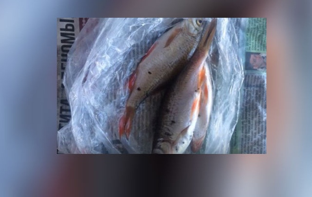 Житель Башкирии поймал рыбу с черными пятнами