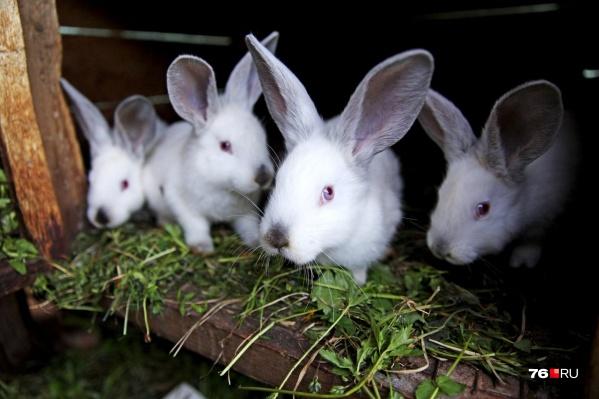 Кроликов похитили прямо из сарайки