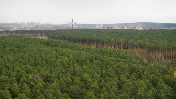 В Юго-Западном лесопарке вырубят часть деревьев