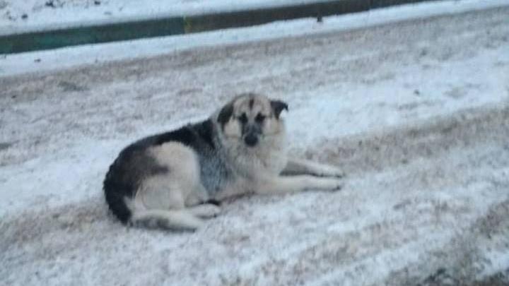 В Водниках жители пятиэтажки построили будку для злой собаки во дворе у соседей