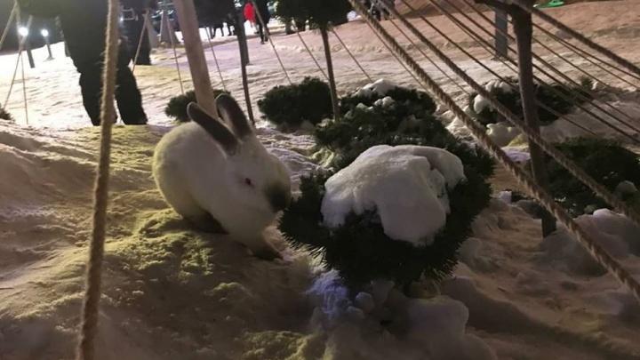 «Без дома и присмотра они не проживут и пару дней»: в парке перед «Мегой» появилась семья кроликов