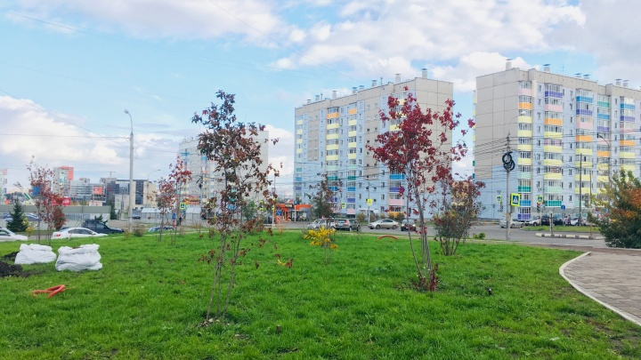 На месте пустыря и стоянки в «Покровском» садят тысячу растений и делают парк для прогулок босиком