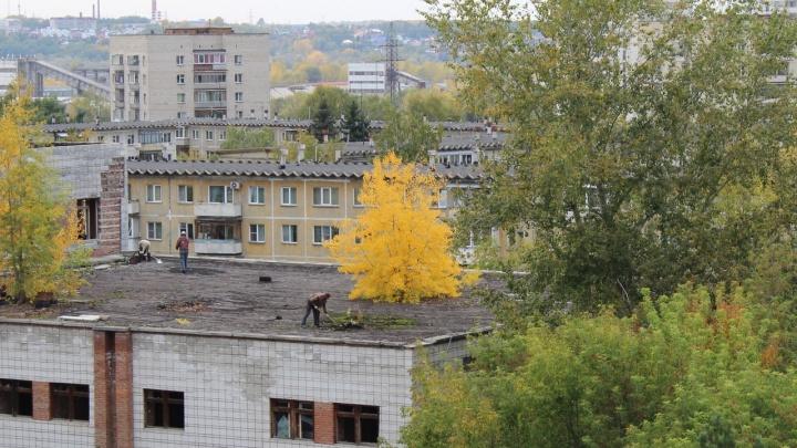Лес рубят даже на крыше: с дома в Советском районе пропали огромные деревья