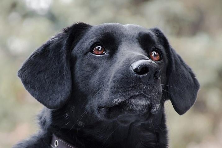Трёхлетняя Черника очень дружелюбна с людьми, но жить в кафе собака не смогла