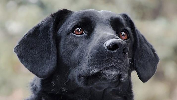 Сибирячка открыла бесплатный интернет-магазин бездомных псов