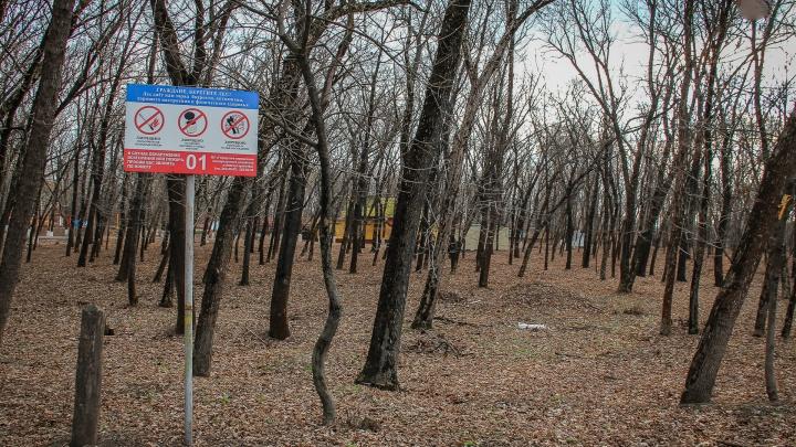 Вокруг Ростовской агломерации высадят леса