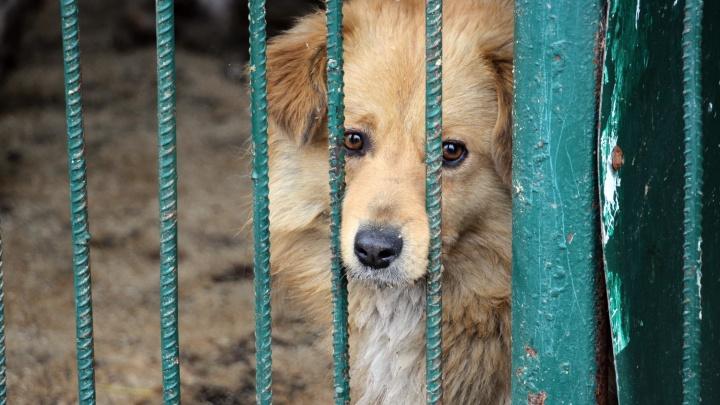 Центральный рынок начал собирать корм для бездомных собак