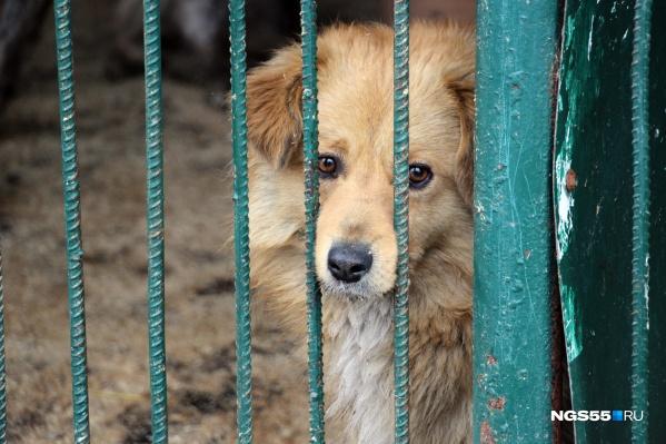 До этого корм для собак собирали только на территорииЛенинского рынка