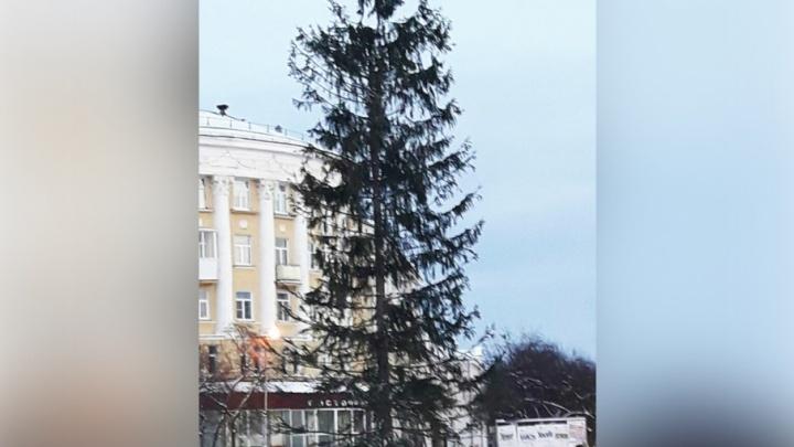 «С прошлого года осталась»: очередная куцая ёлка на Южном Урале вызвала вопросы у горожан
