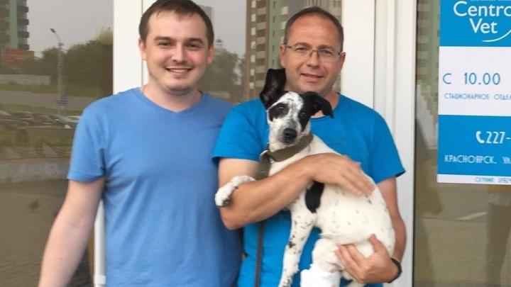 Выброшенную пьяной хозяйкой с балкона собаку вылечили и нашли ей новый дом