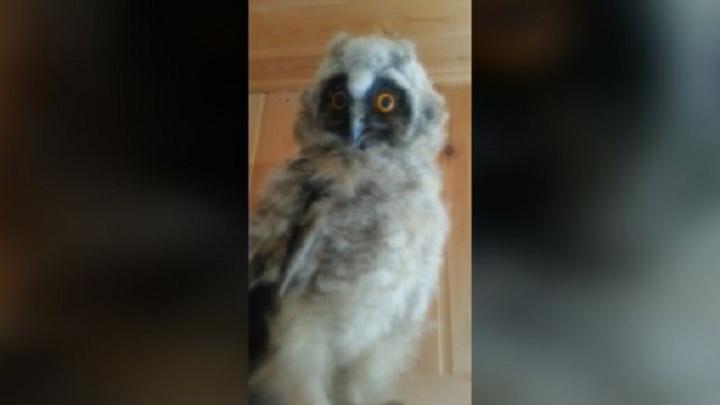 Привет из Хогвартса: в дом к уфимке залетела сова