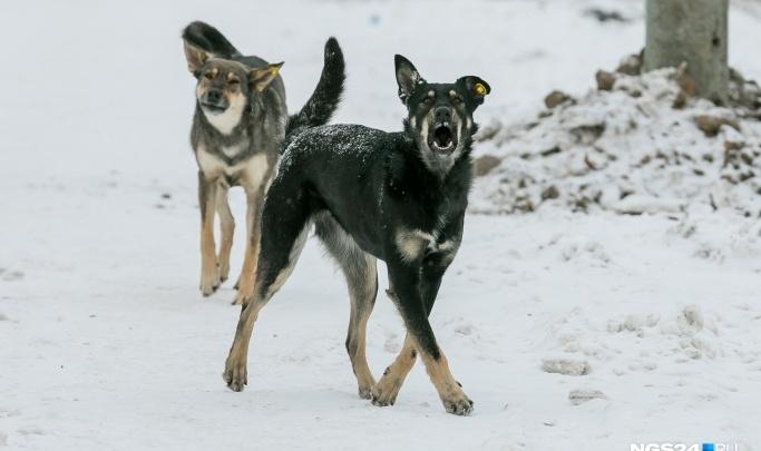 На базе в Ленинском районе нашли тело сторожа, погрызенного бездомными собаками