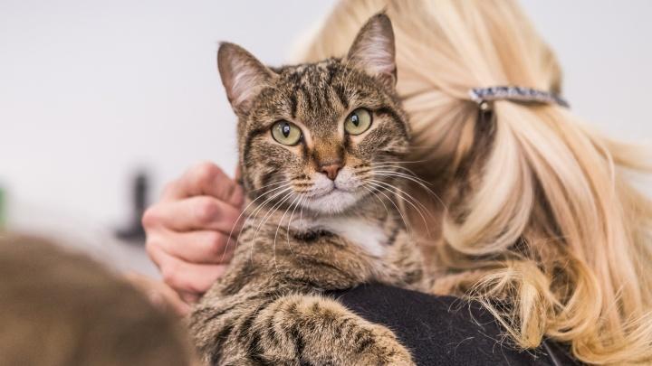 Выбирай любого: в центре Новосибирска провели бесплатную раздачу котов