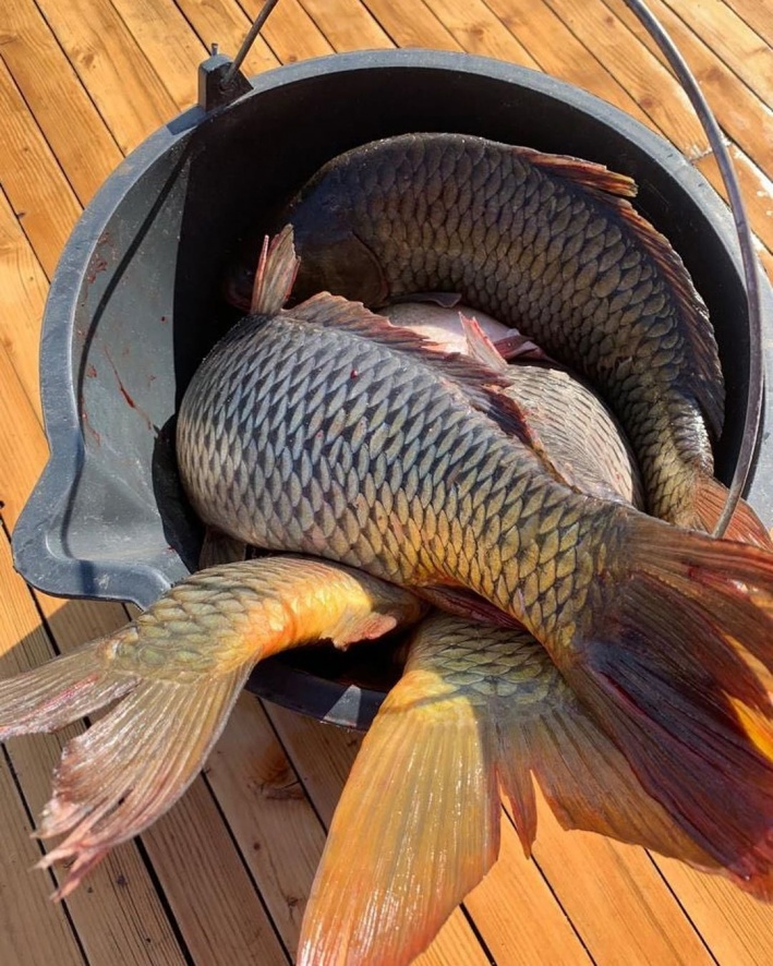 Губернаторам-рыбакам и правда было чем гордиться