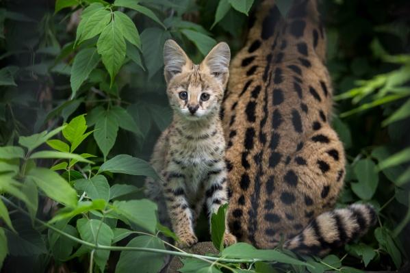 Даже в самые трудные времена новосибирцы приходили смотреть зверей в зоопарке