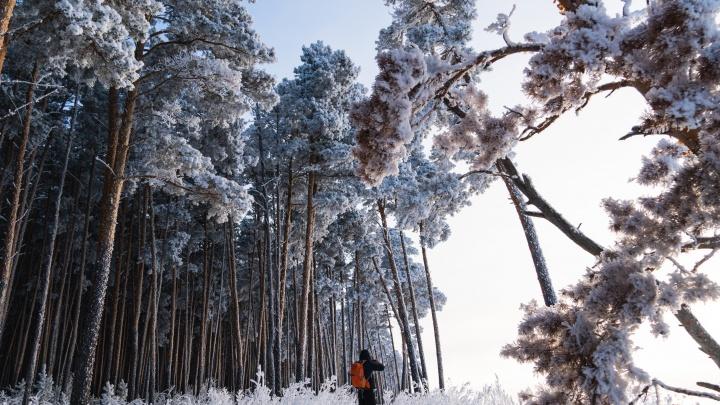 Иней в лучах заката: прогулка по морозному лесу с фотографом NGS55.RU