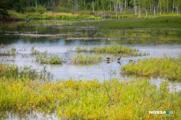 Девочка утонула в озере посёлка Кедровый