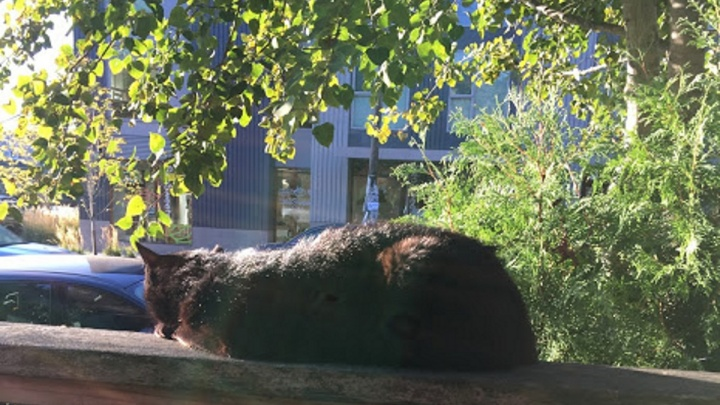 Спасателям из Богучан пришлось снимать забравшуюся на дерево кошку