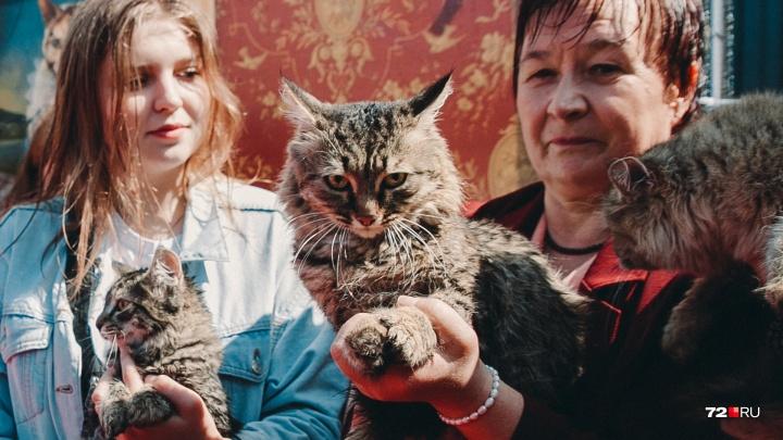 5 самых милых котиков с тюменского парада: от блогера до бродяжек
