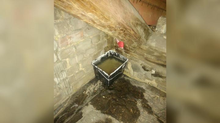 Затопленные квартиры и грибок на стенах: ярославцы обругали капремонт в домах