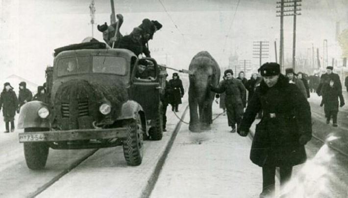 Когда-то слонов было трое. Ко дню рождения Пермского зоопарка вспоминаем его историю