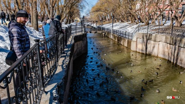 Сезон прогулок открыт: смотрим, как пережили зиму пермские скверы и выбираем, где лучше. Часть 2