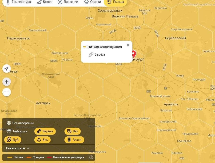 Так выглядит карта  жёлтый цвет — значит, концентрация пыльцы берёзы  низкая. Буквально через 40f21e69c1f