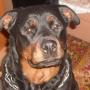 «Собаки её не слушаются»: соседи рассказали о конфликтах с челябинкой, чьи псы изуродовали ребёнка