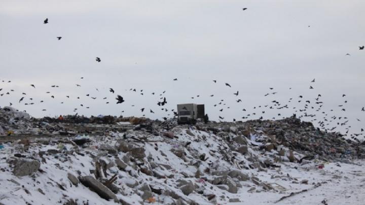 В Самарской области хотят построить мусоросжигающие заводы