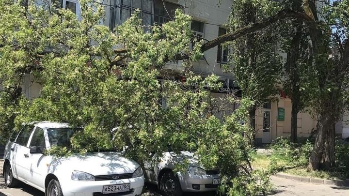 Ветви деревьев в центре Ростова упали на несколько автомобилей