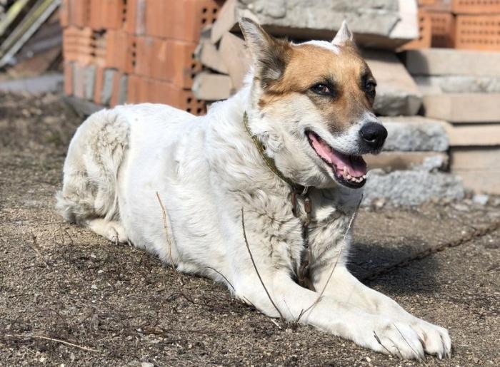Собака неделю провела у Димитровского моста