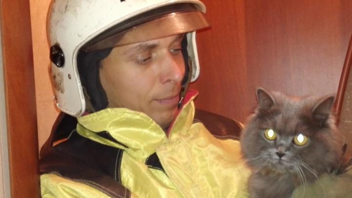 Омские пожарные спасли упитанную кошку, которая застряла в вентиляции