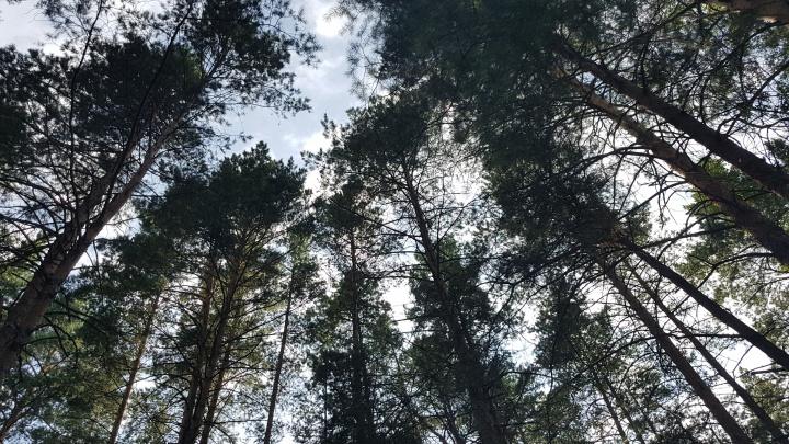 В Зауралье следователи возбудили уголовное дело по факту смерти молодого человека в лесу