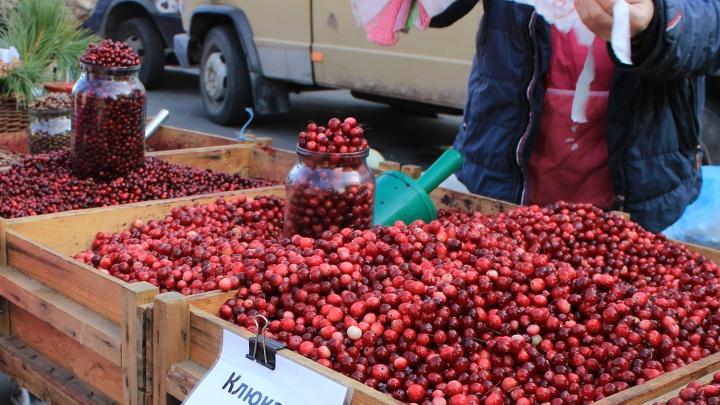 Все в лес: новосибирцам разрешат собирать клюкву и шишки