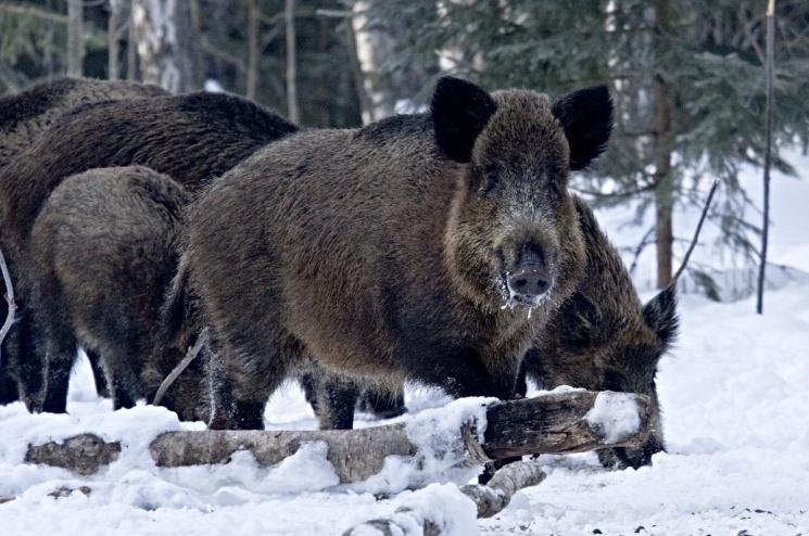 Диких животных оценили в 270 тысяч рублей
