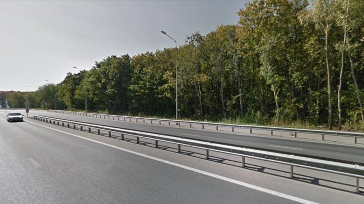 Лес под вырубку? В Кировском районе построят новую дорогу