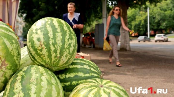 Фермерские рынки: 11 площадок Уфы, где можно купить свежие овощи и фрукты