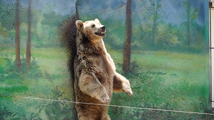 Как спасаются от жары звери в ростовском зоопарке