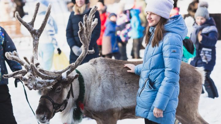Новогодний переполох: в челябинском дворе на АМЗ заметили живого оленя