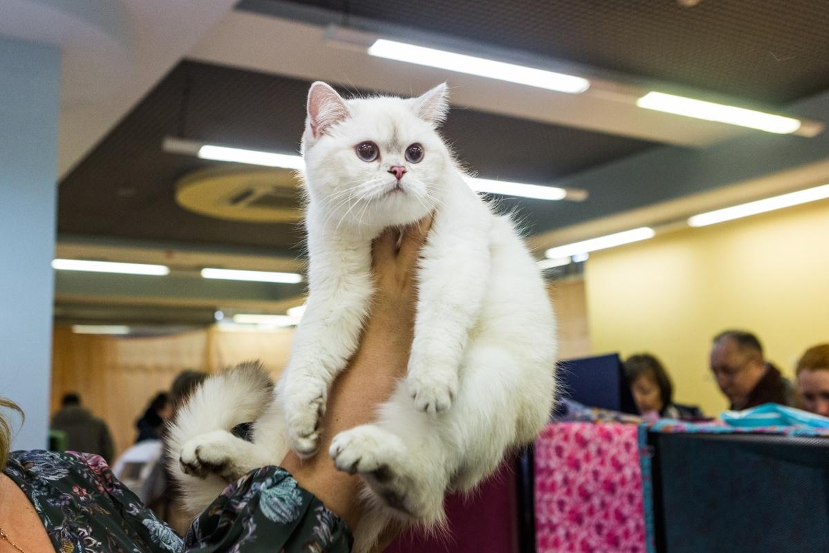 На выставке представлено больше 200 кошек