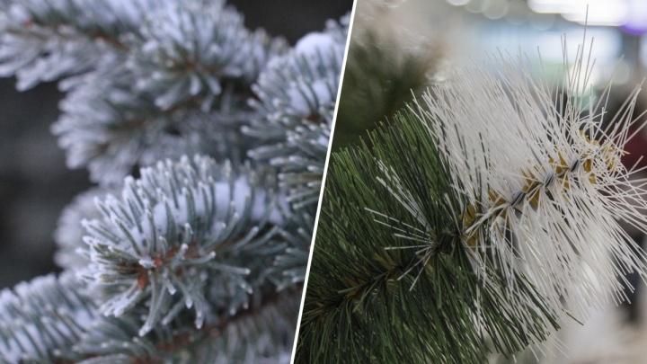 Живая ёлка или искусственная? Отвечают экоактивисты из Архангельска, Greenpeace и Человек-дерево