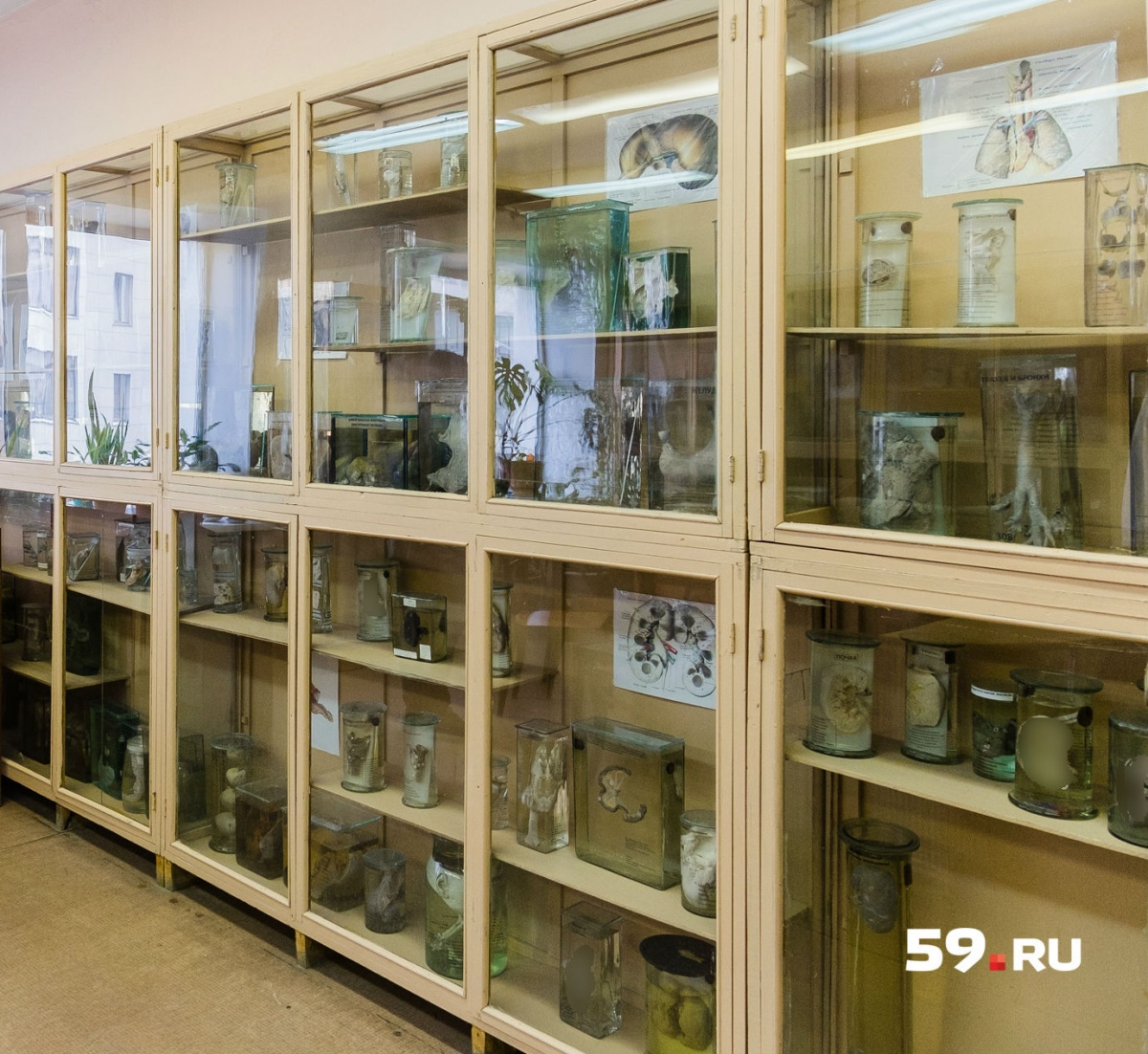 Сейчас залы, где хранятся препараты, называют не музеем, а экспозиционными комнатами