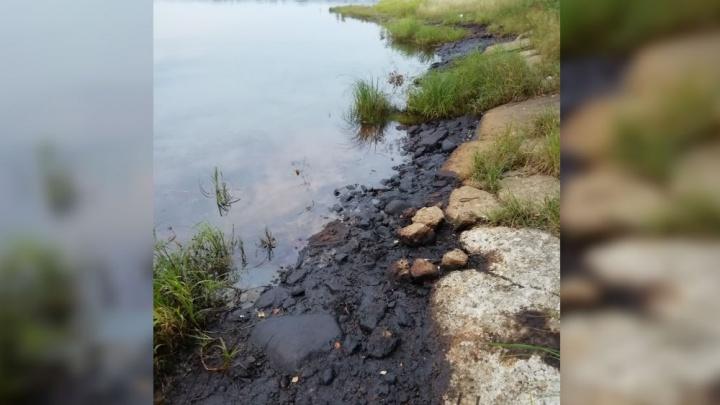 На берегу Волги обнаружили огромные нефтяные пятна. Что говорят власти