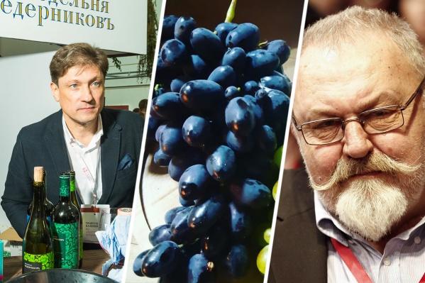 Виноделов Дона обложили налогами, но пообещали субсидии