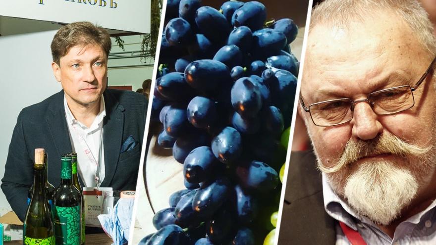 Псевдовино и 35 миллионов рублей на виноградники: рассказываем, как обстоят дела у виноделов Дона