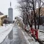 СМИ пишут, что волки терроризируют пригороды Архангельска. Так ли это?